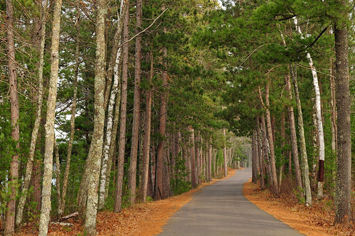 forest road through pines and birches, Wisconsin